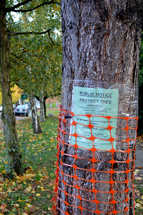 A tree with a sign attached entitled 'Public Notice Protect Tree'.